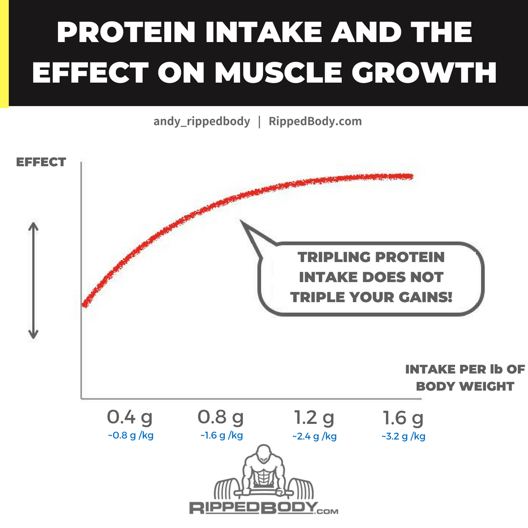Protein Intake And The Effect On Muscle Growth