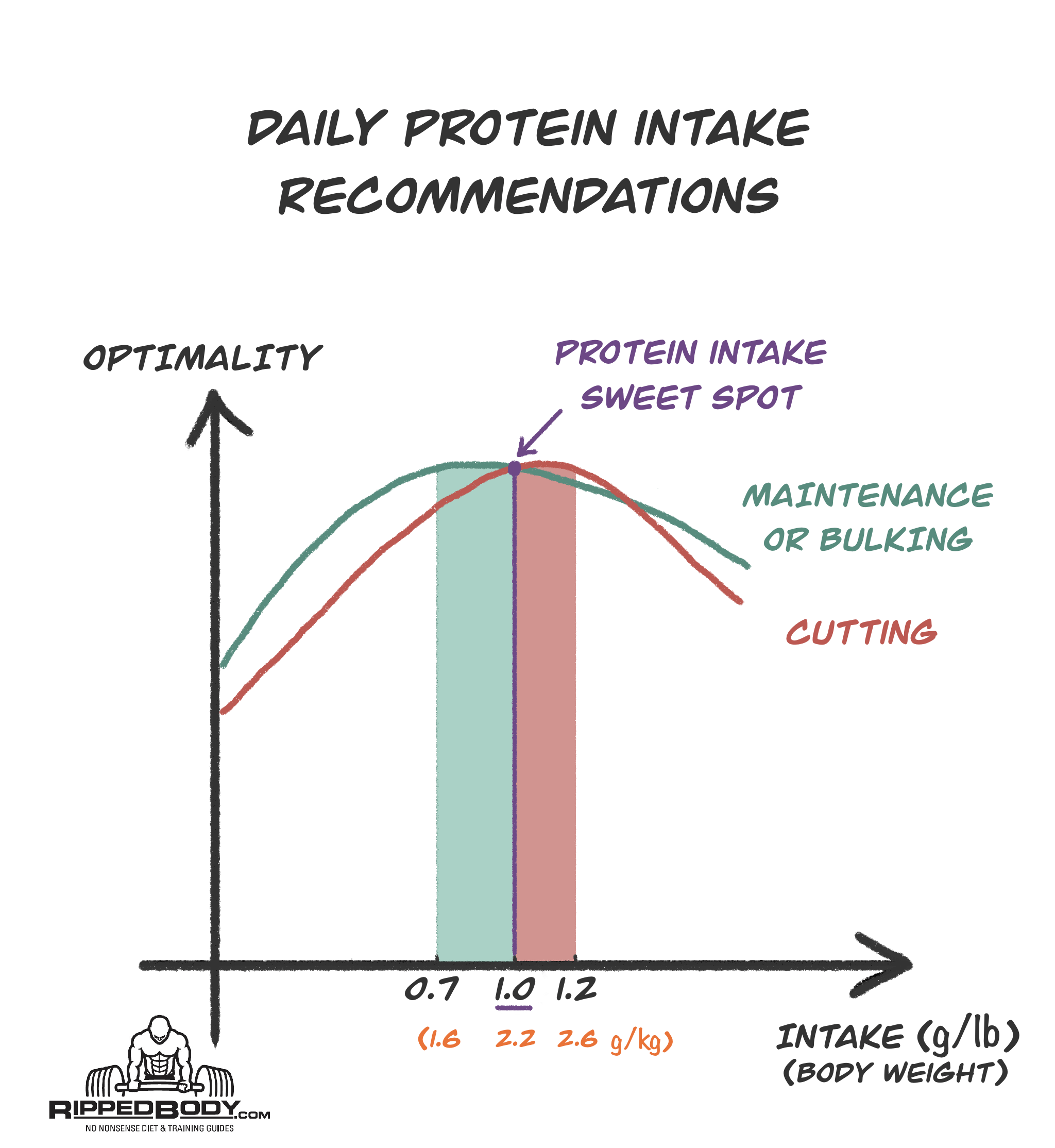 Daily Protein Intake Recommendations